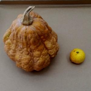 ひょうたんかぼちゃ