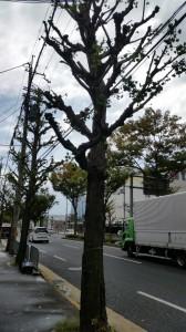 店の街路樹