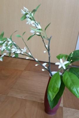 ミカンの花2