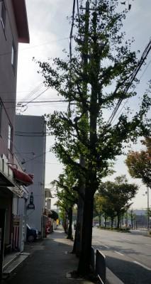 秋街路樹1
